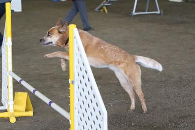 3-10-2019 Bloodhound-9709