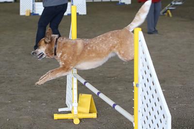 3-10-2019 Bloodhound-9711