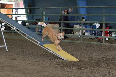 3-10-2019 Bloodhound-9705