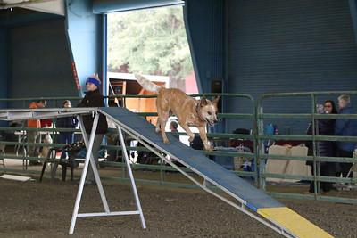 3-10-2019 Bloodhound-9702
