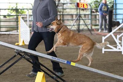 3-10-2019 Bloodhound-9713