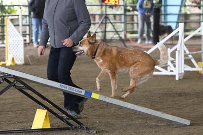 3-10-2019 Bloodhound-9712