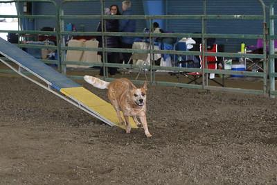 3-10-2019 Bloodhound-9706