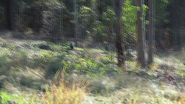 Emu-Creek-Peewee-01