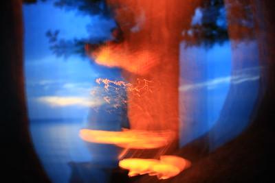 Pohon biru dari dunia saya