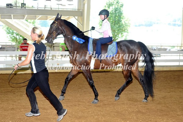 CLASS 33 WT EQUITATION ON LEAD UNDER 8
