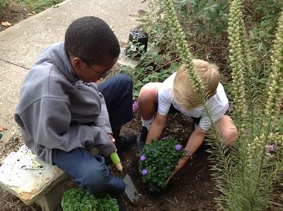 Planting Polinators