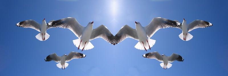 Six Heavenly Backlit Seagulls Flying Overhead in Blue Sky.