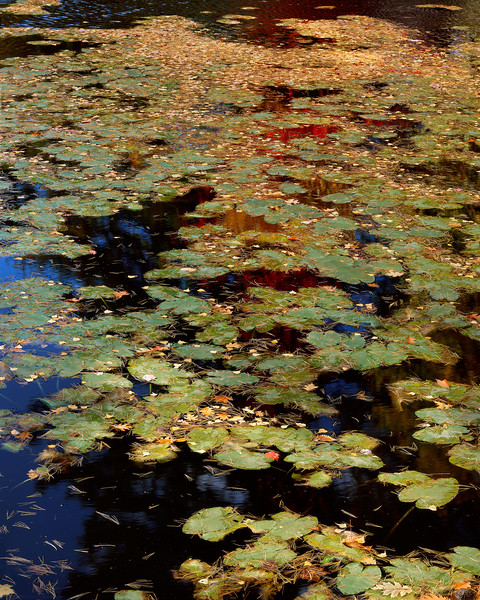 A Pond In New Hampshire-4004