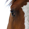 The World in the Eye of a Horse