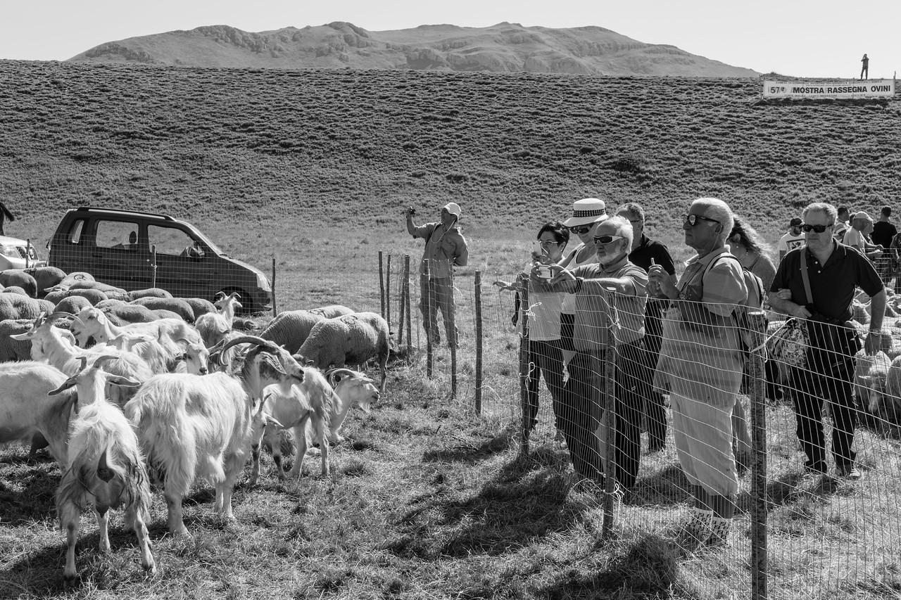 C'est bien connu : nous sommes , nous  moutons et chèvres très photogéniques. Au milieu mon ami photographe Otmar Dreisel en action.