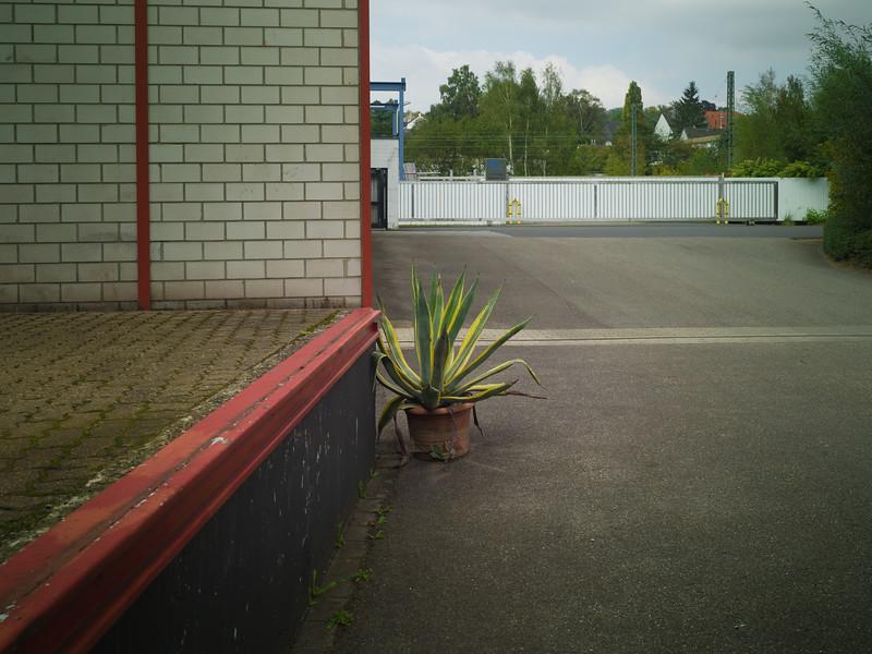 Büropflanze an Rampe