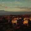 WL1984060066 - Amboseli NP, Kenya, 6/1984