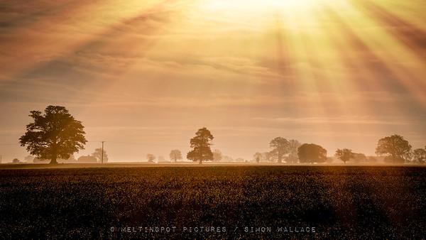 Gustard Wood: Fields of Gold