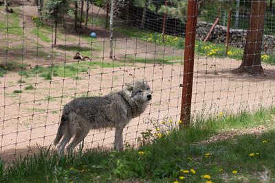 Wolf and Wildlife Center - Colorado