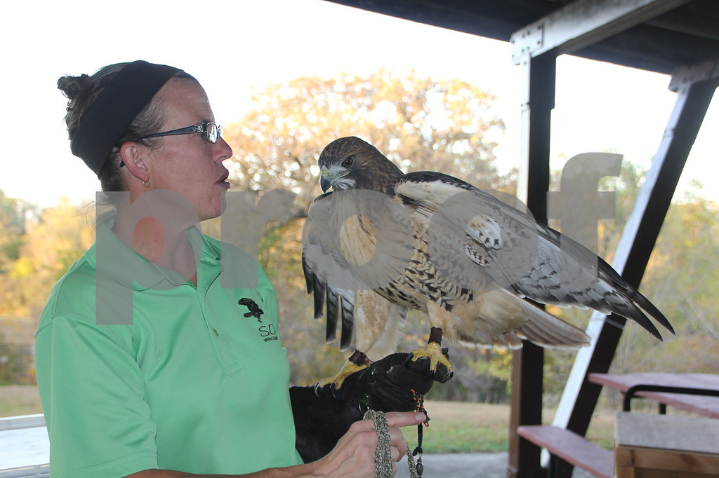 Pictured here is SOAR handler and volunteer, Linette Bernard and a red tailed hawk named Bella, who is one of a few of the raptors that were part of the raptors education, which was just another one of many activities for families attending the 50th Celebration for Kennedy Park and Trail held on Sunday, October 11, 2015. The event took place at Kennedy Park in Fort Dodge.