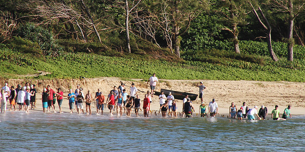 "PCC alumni, friends and community members now begin to simultaneously pull (""huki"") in the ropes to the net and start walking along the beach toward the other end of the net, making the ""fish trap"" smaller and smaller; Polynesian Cultural Center photo by Mike Foley"
