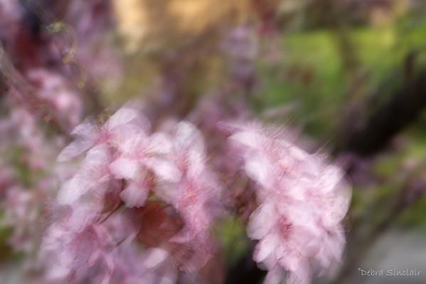 Debbie - Week #14 - Blur -1