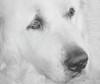 Rocky - Week 30 - White on White