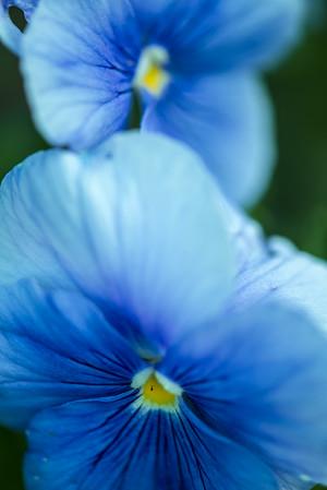 Michelle - Week 32 - Blue