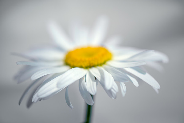 Michelle - Week  30 - White on White
