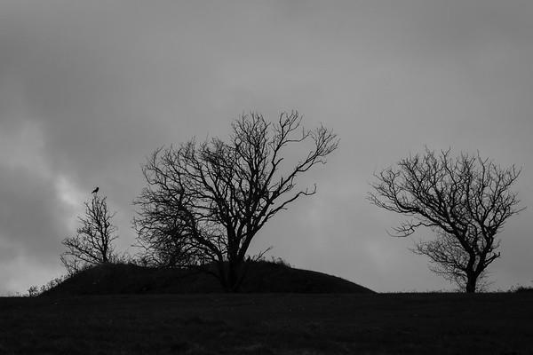 One bird, alone