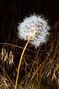 20110710-Wild flowers_DSC2554