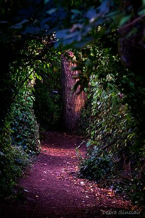 Debbie - Week #38 - Enchanted Forest