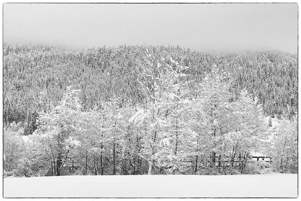 Fresh snow fall 2