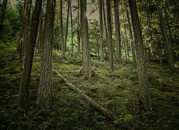 Black Magic Forest