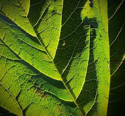 David Blackwell-Shades of Green