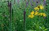 Week 31 Mona-SummerButterfly Garden