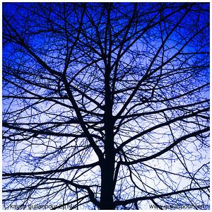 "3/52 - ""Tree"""