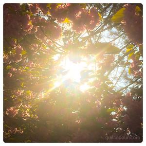 """15/52 - """"Blossom"""""""