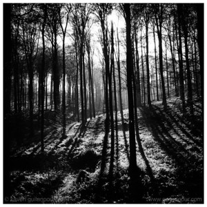 """2/52 - """"Forest"""""""