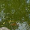Flowers-Pond-15