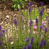 Flowers-Pond-21