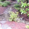02-09-14 BIG rain (1 of 5)
