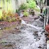 02-09-14 BIG rain (2 of 5)