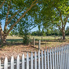 DSC_9332_pasture