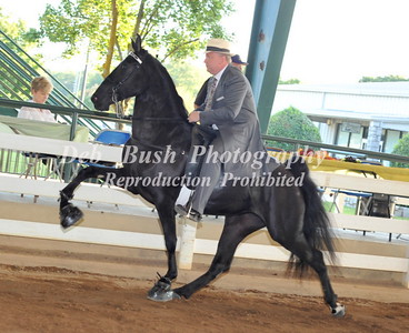 CLASS 2 TWO YR OLD AMATEUR MARES & GELDINGS