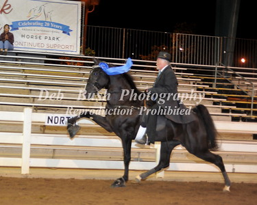 CLASS 21  3 YEAR OLD AMATEUR STALLIONS SPECIALTY