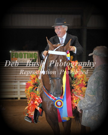 CLASS 50 WALKING HORSE STAKE CHAMPIONSHIP (RC) CANTER