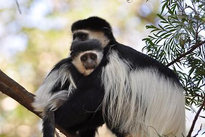 Primates / Primaten