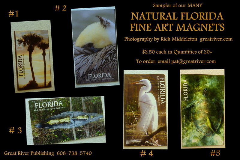 FLORIDA MAGNET CARD SAMPLER<br /> Just a reminder that Rich Middleton's Photographs translate very well as real photo kitchen magnets. Ours are heavy duty magnets that really cling!!