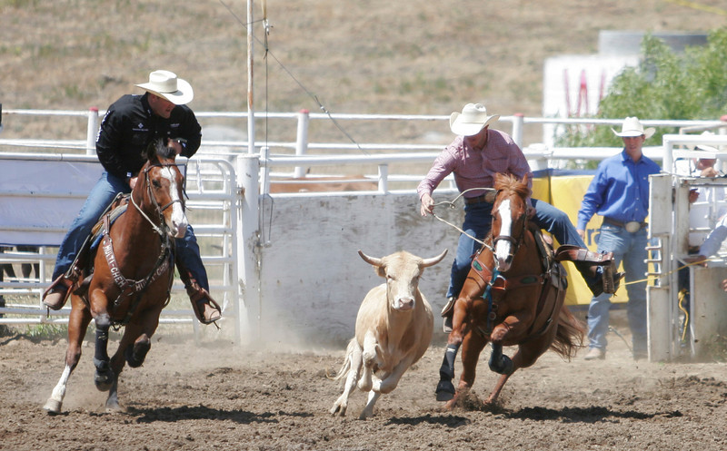 A cowboy chase a steer during the Steer Wrestling event at the 2014 edition of the Woodlake Lions Rodeo.