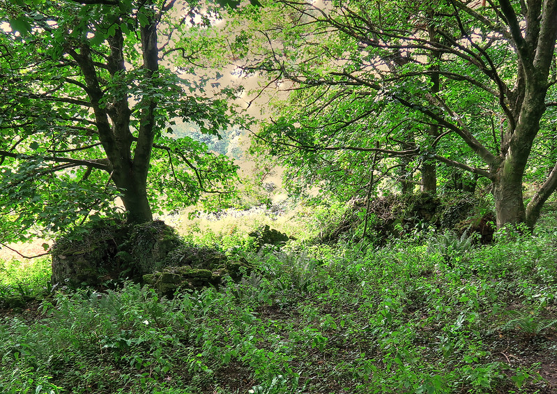 The remains of an old building hide under the trees in the valley near Fishing Barrow