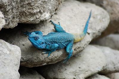 4. Reptiles and amphibians of Ethiopia / Reptilien und Amphibien Äthiopiens