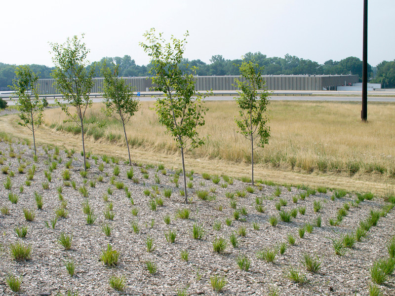 """Landscaping at the Sam Jones Interchange.  The 2010 Lilly Global Day of Service focused on the six-mile I-70 corridor running from the airport through downtown Indianapolis. <a href=""""http://www.kibi.org/"""">Keep Indianapolis Beautiful, Inc.</a> (KIBI) a local nonprofit with a 30-year track record of successful beautification partnerships in Indianapolis, envisioned something much grander than the usual highway ramps. Bringing together the city of Indianapolis, the Indiana Department of Transportation, community leaders, neighborhood groups, and the private sector, KIBI coordinated a master planning process for the corridor with the landscape architecture firm <a href=""""http://www.bdmd.com/"""">Browning Day Mullins Deerdorf</a>. The project culminated in the 2010 Eli Lilly Day of Service, where over 8,000 Lilly employees added low maintenance vegetation, planted trees, and positioned totem poles and lotus leaf sculptures, transforming the I-70 corridor. The $1 million TE grant supporting the project was matched by an additional $1 million from Eli Lilly in addition to the volunteer labor, a major private investment on behalf of public infrastructure.  Learn more about this extraordinary project at  http://www.agreenerwelcome.org/."""