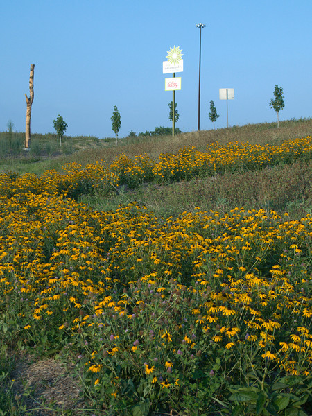 "Totem pole art at the Harding Street interchange. A total of 58 poles were designed by Jason Bord and installed.   The 2010 Lilly Global Day of Service focused on the six-mile I-70 corridor running from the airport through downtown Indianapolis. <a href=""http://www.kibi.org/"">Keep Indianapolis Beautiful, Inc.</a> (KIBI) a local nonprofit with a 30-year track record of successful beautification partnerships in Indianapolis, envisioned something much grander than the usual highway ramps. Bringing together the city of Indianapolis, the Indiana Department of Transportation, community leaders, neighborhood groups, and the private sector, KIBI coordinated a master planning process for the corridor with the landscape architecture firm <a href=""http://www.bdmd.com/"">Browning Day Mullins Deerdorf</a>. The project culminated in the 2010 Eli Lilly Day of Service, where over 8,000 Lilly employees added low maintenance vegetation, planted trees, and positioned totem poles and lotus leaf sculptures, transforming the I-70 corridor. The $1 million TE grant supporting the project was matched by an additional $1 million from Eli Lilly in addition to the volunteer labor, a major private investment on behalf of public infrastructure.  Learn more about this extraordinary project at  http://www.agreenerwelcome.org/."